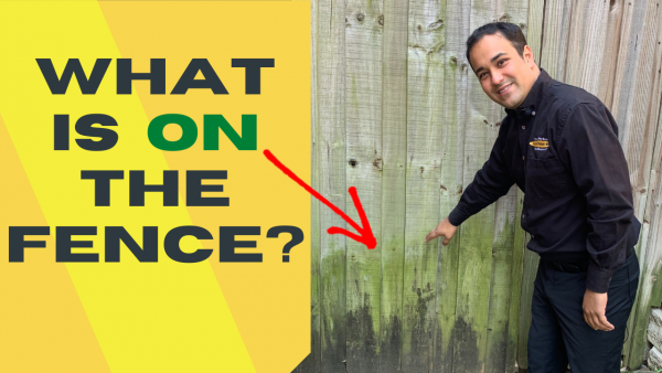 Mold and mildew on fence